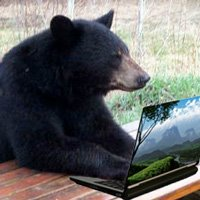 bear-laptop